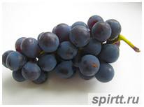 домашнее-вино-из-винограда-Изабелла