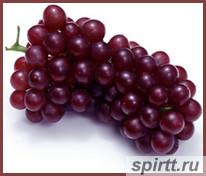 брага-из-винограда